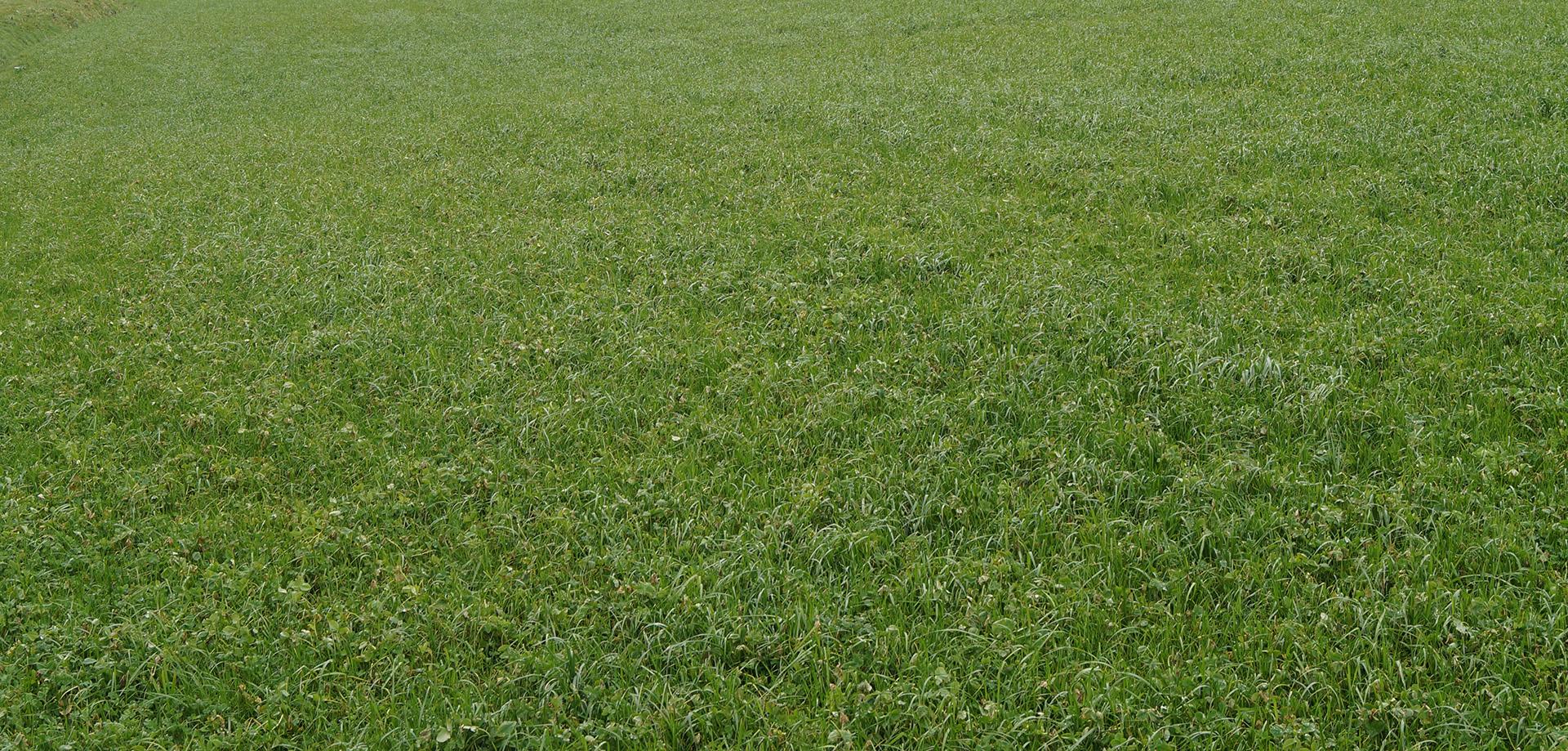 Deloche Biogaz